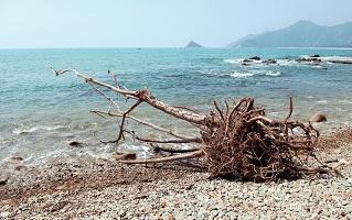 Perished wood on beach